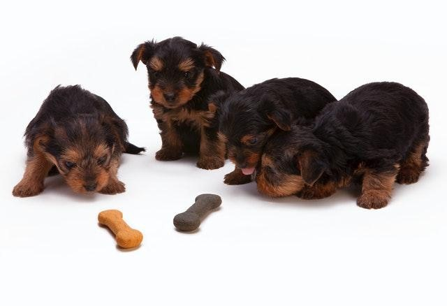 CBD Dog Treats For Anxiety Relief