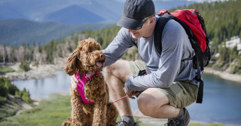 5 Tips In Choosing The Right Dog Harness Canada